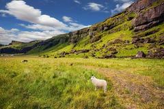 De zomer in IJsland royalty-vrije stock afbeelding