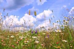 De zomer kleurrijke bloemen op een achtergrond van blauwe hemel Stock Afbeelding