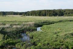 De zomer landelijk landschap Stock Afbeeldingen