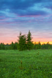 De zomer landelijk landschap met bos, een weide en een mist bij zonsopgang Royalty-vrije Stock Foto