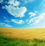 De zomer landelijk landschap van de schoonheid Royalty-vrije Stock Afbeeldingen