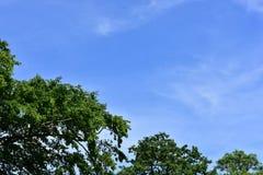 De zomer is in de lucht over Londen Royalty-vrije Stock Afbeelding