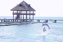 De zomer met dolfijn stock afbeeldingen