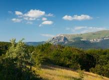 De zomer mooi bos Royalty-vrije Stock Afbeelding