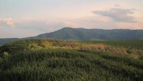 De zomer, mooie groene vallei, slingert het gras in de wind stock footage