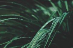 De zomer natuurlijke backround Verzacht gestemde vage mening met regendruppels stock afbeelding