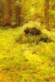 De zomer Noordelijk Forest Glade met een Stomp Royalty-vrije Stock Afbeeldingen