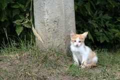 In de zomer, op de straat dichtbij het concrete rood van het pijler dakloze blinde katje stock foto