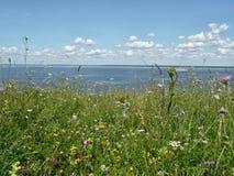 De zomer op Volga stock fotografie
