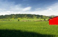 De zomer pastoraal landschap Stock Foto