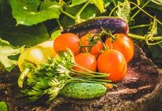 De zomer plantaardig dieet Stock Afbeeldingen