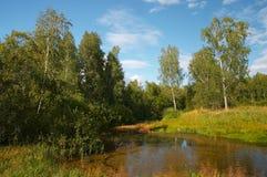 De zomer in Siberisch bos Stock Foto's