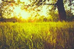 De zomer Sunny Forest Trees Royalty-vrije Stock Afbeeldingen