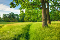 De zomer Sunny Forest Trees And Green Grass nave Royalty-vrije Stock Foto's