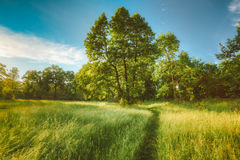 De zomer Sunny Forest Trees And Green Grass nave Royalty-vrije Stock Afbeeldingen