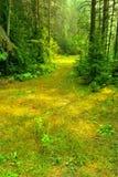 De zomer Sunny Russian Forest Glade Stock Fotografie