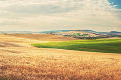 De zomer Toscaans landschap, groen gebied en blauwe hemel Stock Foto