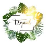 De zomer tropische achtergrond met exotische palmbladen en installaties Stock Fotografie