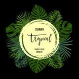 De zomer tropische achtergrond met exotische palmbladen en installaties Royalty-vrije Stock Afbeeldingen