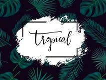 De zomer tropische achtergrond met exotische palmbladen en installaties Royalty-vrije Stock Fotografie