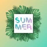 De in Zomer Tropische Bladeren De zomerachtergrond voor malplaatje DE Stock Afbeeldingen