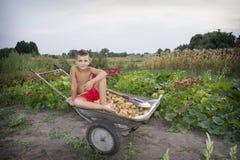 In de zomer, in de tuin, draagt een jongen in een kruiwagen een potat Royalty-vrije Stock Afbeeldingen