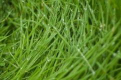 De zomer, vers groen gras met dalingen van water royalty-vrije stock fotografie