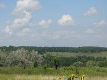 De zomer wild heuvelig terrein stock fotografie