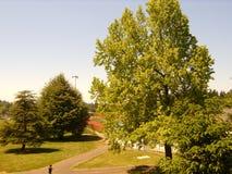 De Zomer Wilson High School van de schoolboom ` s Royalty-vrije Stock Afbeelding