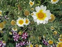 De zomer witte bloem stock foto's