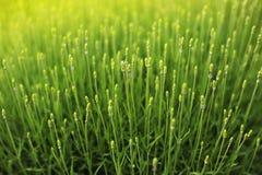 De zomer zonnig gras in de yard stock foto