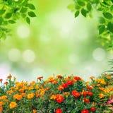 De zomerachtergrond Royalty-vrije Stock Afbeelding