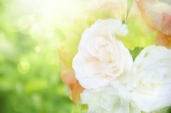 De zomerachtergrond, helder onduidelijk beeld Royalty-vrije Stock Fotografie
