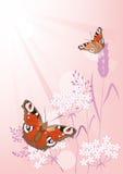 De zomerachtergrond met bloemen en vlinders Stock Foto