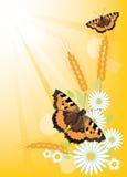 De zomerachtergrond met bloemen en vlinders Royalty-vrije Stock Foto's