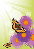 De zomerachtergrond met bloemen en vlinders Stock Afbeeldingen