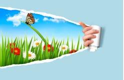 De zomerachtergrond met bloemen, gras en een lieveheersbeestje Stock Afbeeldingen