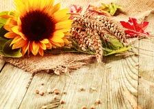 De zomerachtergrond met een zonnebloem en een tarwe Stock Foto