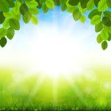 De zomerachtergrond met groene bladeren Stock Fotografie