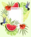 De zomerachtergrond met kolibries, watermeloen en rode hibiscus Bloemenkader met kleine kolibries die dichtbij bloemen vliegen vector illustratie
