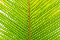 De Zomerachtergrond van de palmtak Stock Foto's