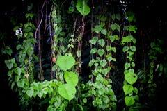 De zomerachtergrond van wildernis groene bladeren in exotische tonen Royalty-vrije Stock Foto