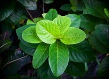 De zomerachtergrond van wildernis groene bladeren in exotische tonen Stock Afbeelding