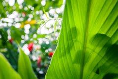 De zomerachtergrond van wildernis groene bladeren in exotische tonen Stock Foto's