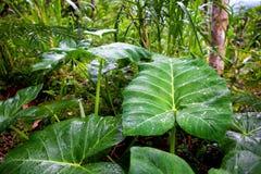 De zomerachtergrond van wildernis groene bladeren in exotische tonen Royalty-vrije Stock Afbeeldingen