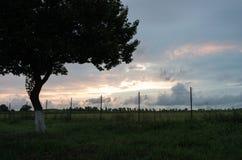 De zomeravond, mooie bewolkte hemel, eenzame boom stock foto's