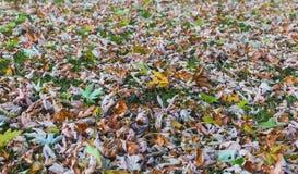 De zomerbladeren Stock Afbeelding