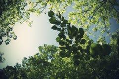 De zomerbladeren en grote lichten royalty-vrije stock fotografie