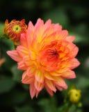 De zomerbloem Royalty-vrije Stock Fotografie