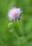 De zomerbloem stock foto
